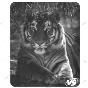 "Коврик для мышки VS ""Фауна"", ""Тигр"" (194*233*3 мм) полипропилен+вспененный пластик"