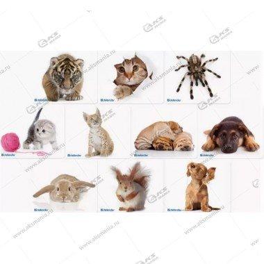 Коврик для мышки Defender тканевый, шелковый, 10 изображений. 230x190x1.6мм